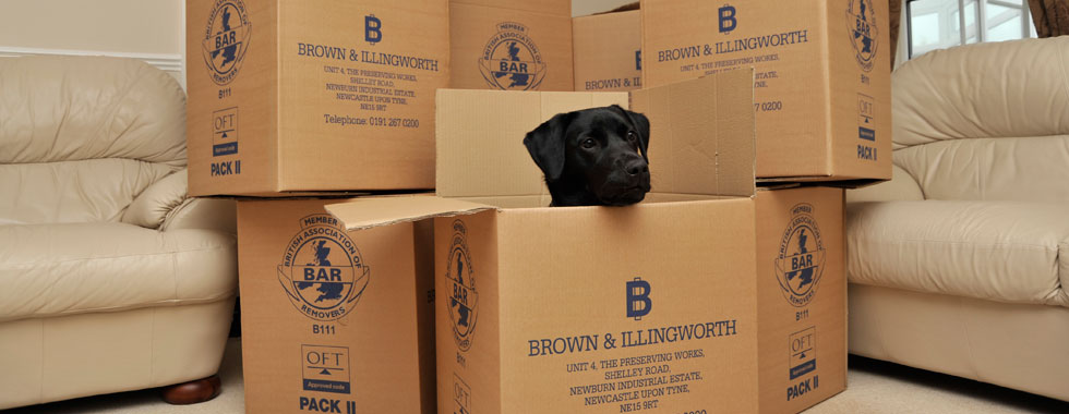 Brown & Illingworth boxes & dog